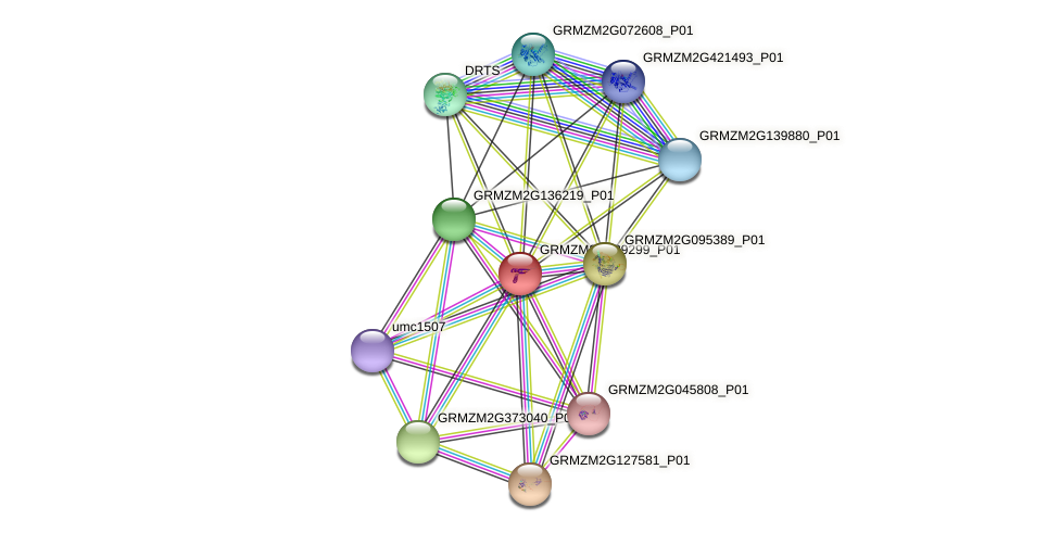 GRMZM2G389299_P01 protein (Zea mays) - STRING interaction network