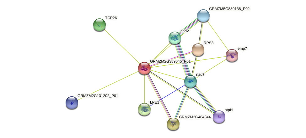 GRMZM2G389645_P01 protein (Zea mays) - STRING interaction network