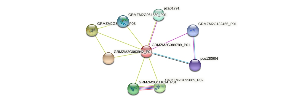 GRMZM2G389789_P01 protein (Zea mays) - STRING interaction network