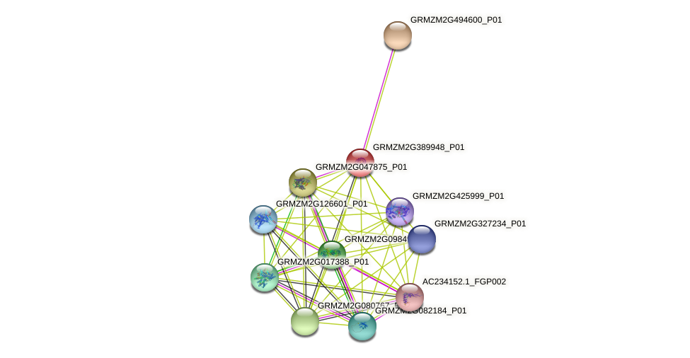 GRMZM2G389948_P01 protein (Zea mays) - STRING interaction network