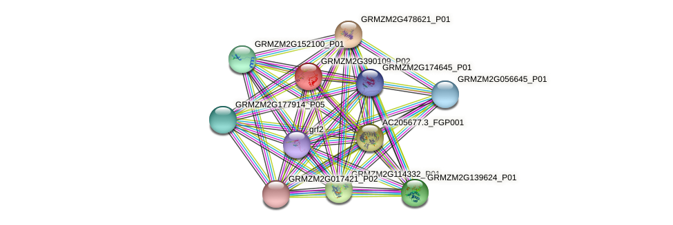 GRMZM2G390109_P02 protein (Zea mays) - STRING interaction network