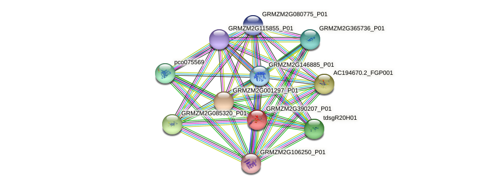 GRMZM2G390207_P01 protein (Zea mays) - STRING interaction network