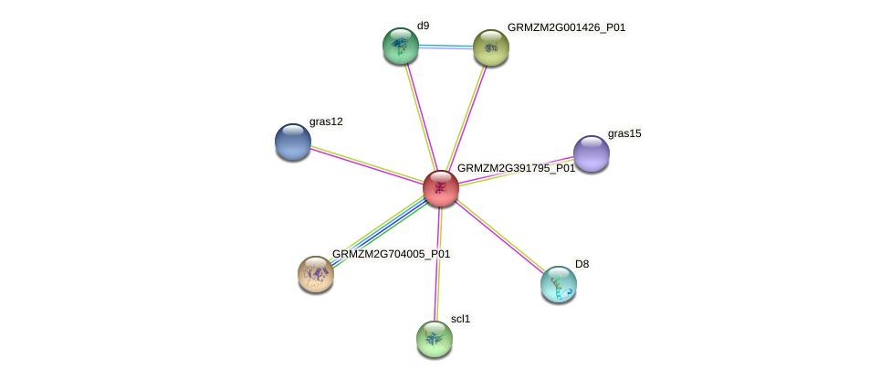 GRMZM2G391795_P01 protein (Zea mays) - STRING interaction network