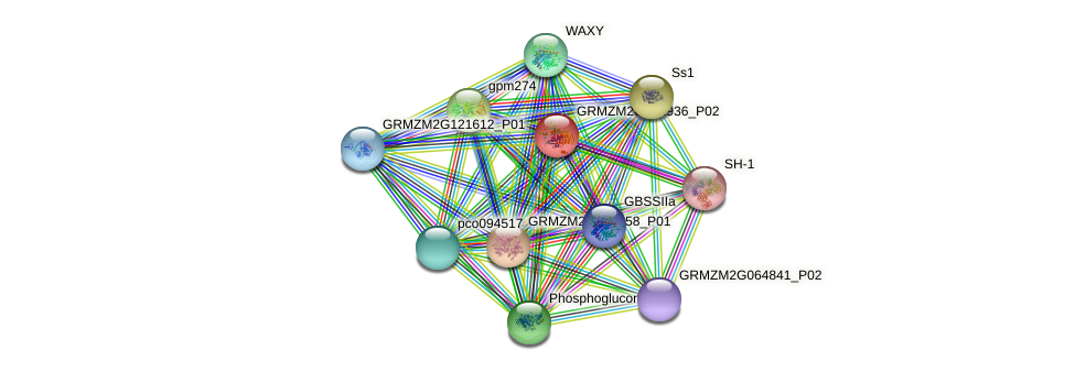 GRMZM2G391936_P02 protein (Zea mays) - STRING interaction network