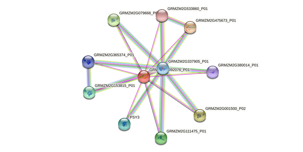 GRMZM2G392076_P01 protein (Zea mays) - STRING interaction network