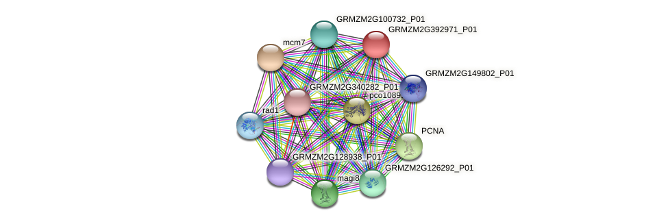 GRMZM2G392971_P01 protein (Zea mays) - STRING interaction network