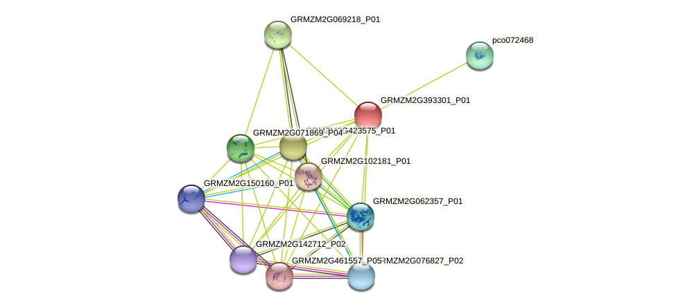 GRMZM2G393301_P01 protein (Zea mays) - STRING interaction network