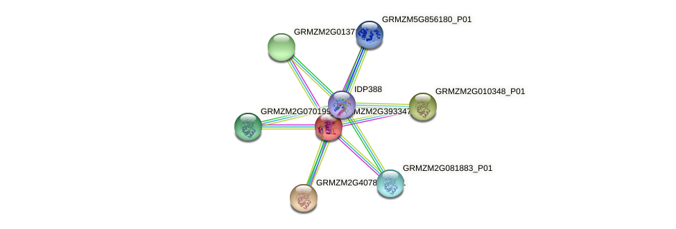 GRMZM2G393347_P01 protein (Zea mays) - STRING interaction network