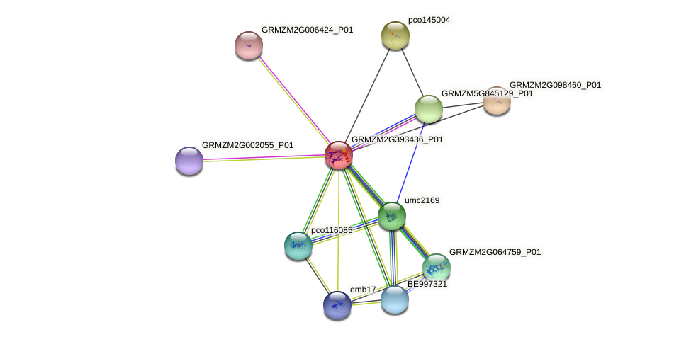 GRMZM2G393436_P01 protein (Zea mays) - STRING interaction network