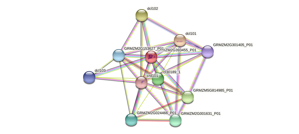 GRMZM2G393455_P01 protein (Zea mays) - STRING interaction network