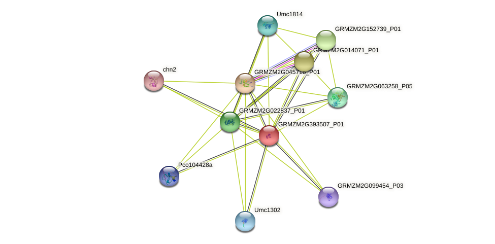 GRMZM2G393507_P01 protein (Zea mays) - STRING interaction network