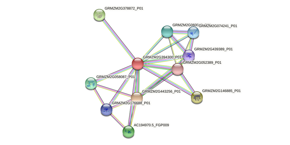 GRMZM2G394300_P01 protein (Zea mays) - STRING interaction network