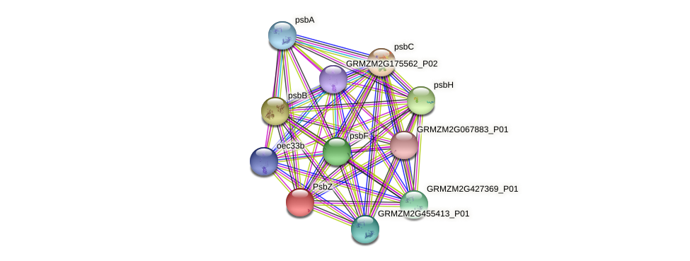 psbZ protein (Zea mays) - STRING interaction network