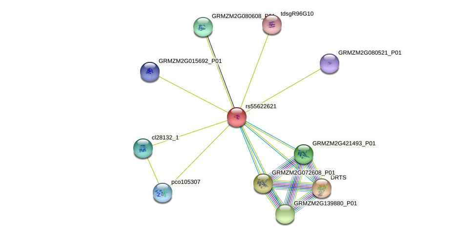 GRMZM2G395236_P01 protein (Zea mays) - STRING interaction network
