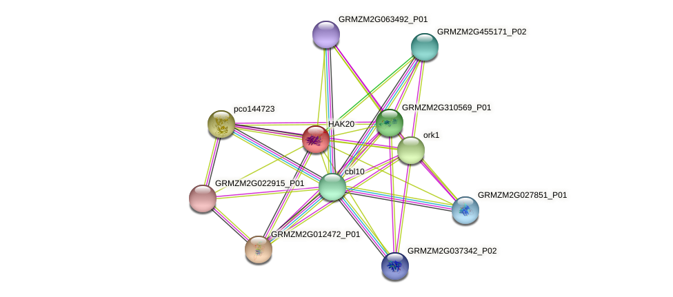 HAK20 protein (Zea mays) - STRING interaction network