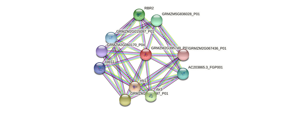 GRMZM2G395749_P01 protein (Zea mays) - STRING interaction network