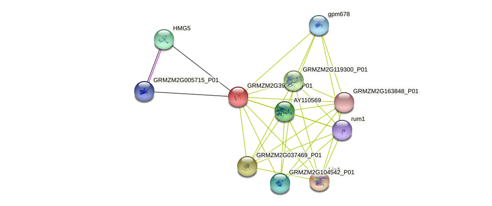 GRMZM2G395983_P01 protein (Zea mays) - STRING interaction network