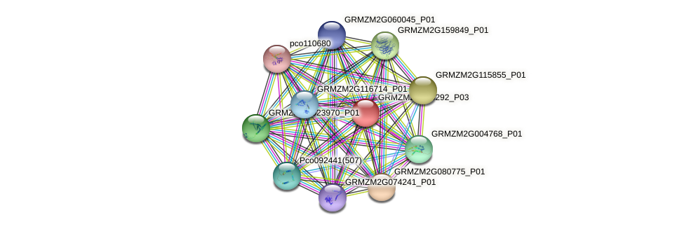 GRMZM2G396292_P01 protein (Zea mays) - STRING interaction network
