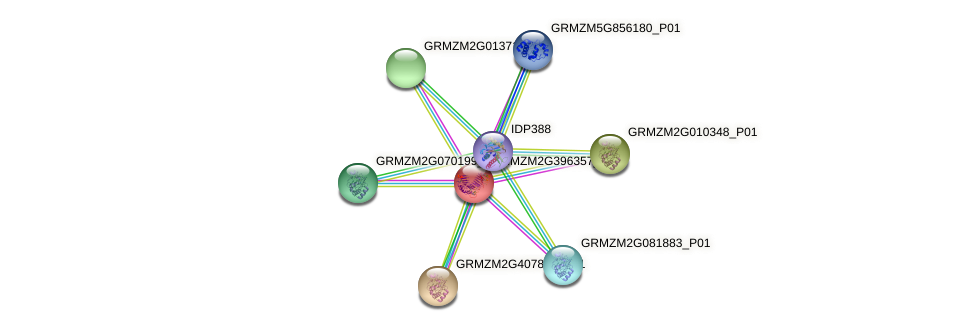 GRMZM2G396357_P01 protein (Zea mays) - STRING interaction network