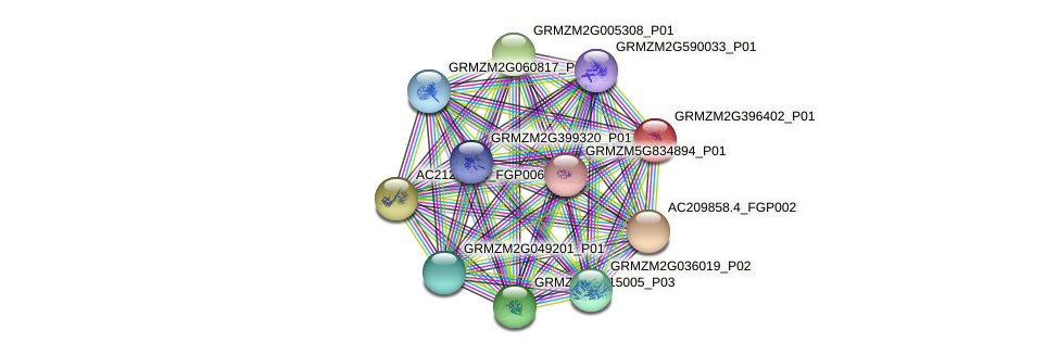 GRMZM2G396402_P01 protein (Zea mays) - STRING interaction network