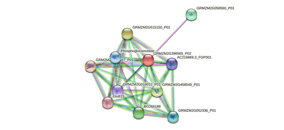 GRMZM2G396565_P02 protein (Zea mays) - STRING interaction network