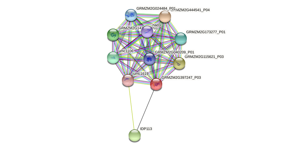 GRMZM2G397247_P03 protein (Zea mays) - STRING interaction network
