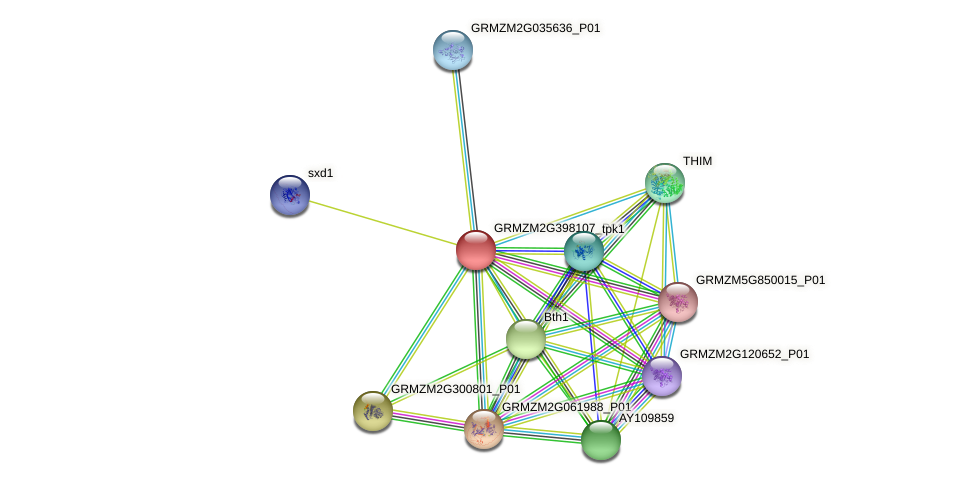 GRMZM2G398107_P01 protein (Zea mays) - STRING interaction network