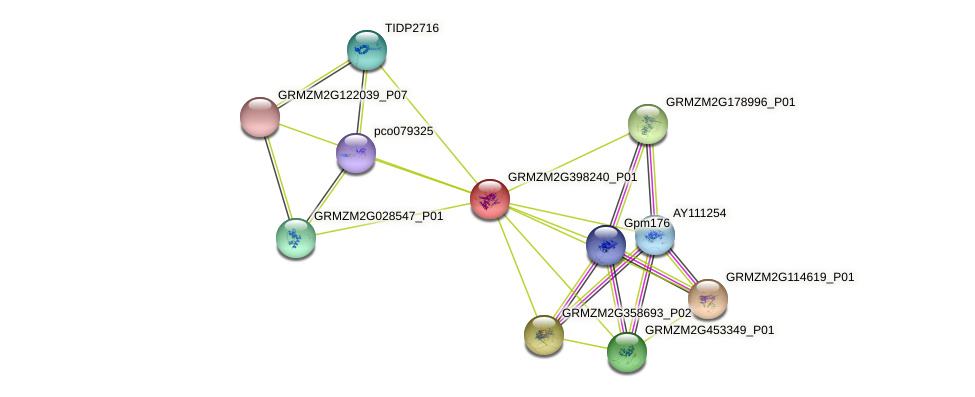 GRMZM2G398240_P01 protein (Zea mays) - STRING interaction network