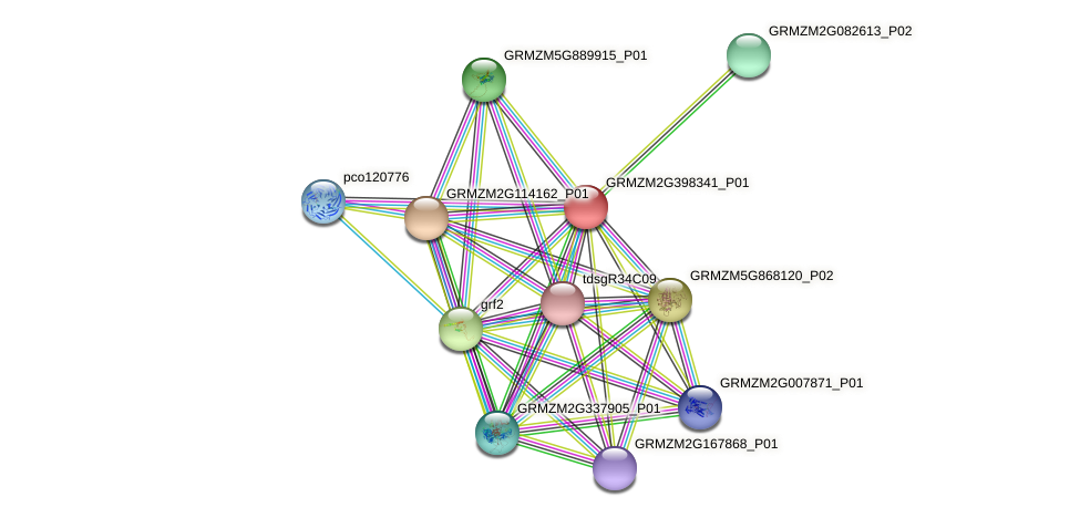 GRMZM2G398341_P01 protein (Zea mays) - STRING interaction network