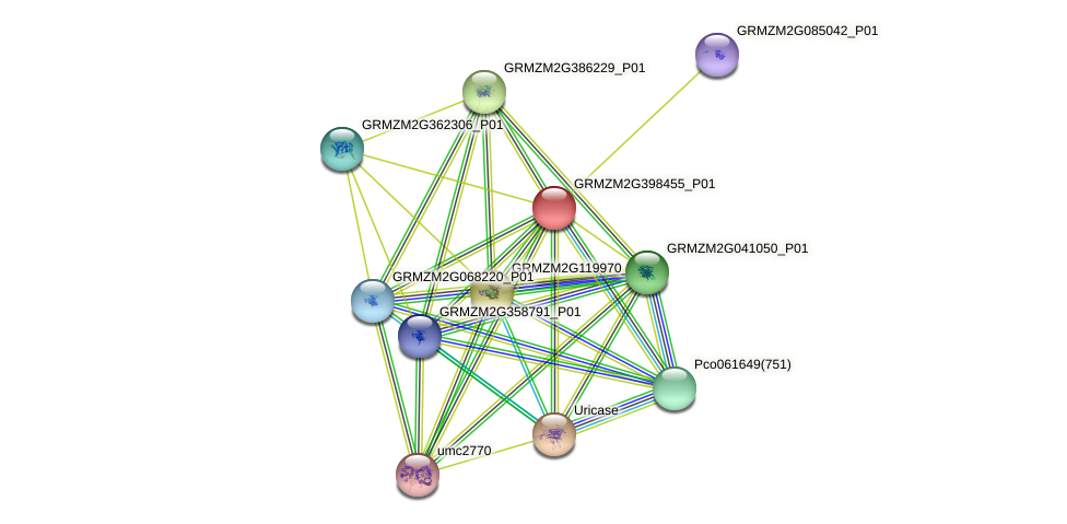 GRMZM2G398455_P01 protein (Zea mays) - STRING interaction network