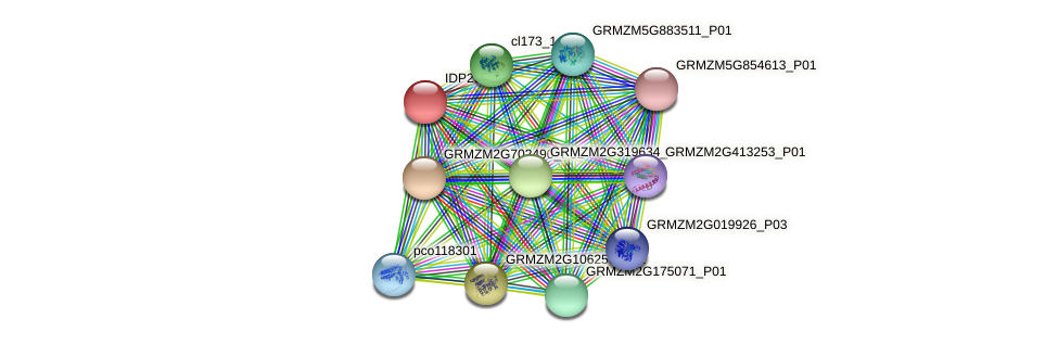 IDP290 protein (Zea mays) - STRING interaction network