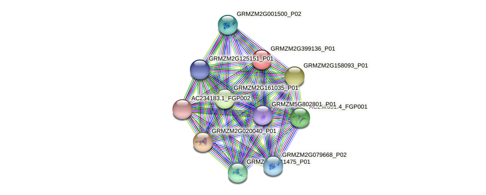 GRMZM2G399136_P01 protein (Zea mays) - STRING interaction network