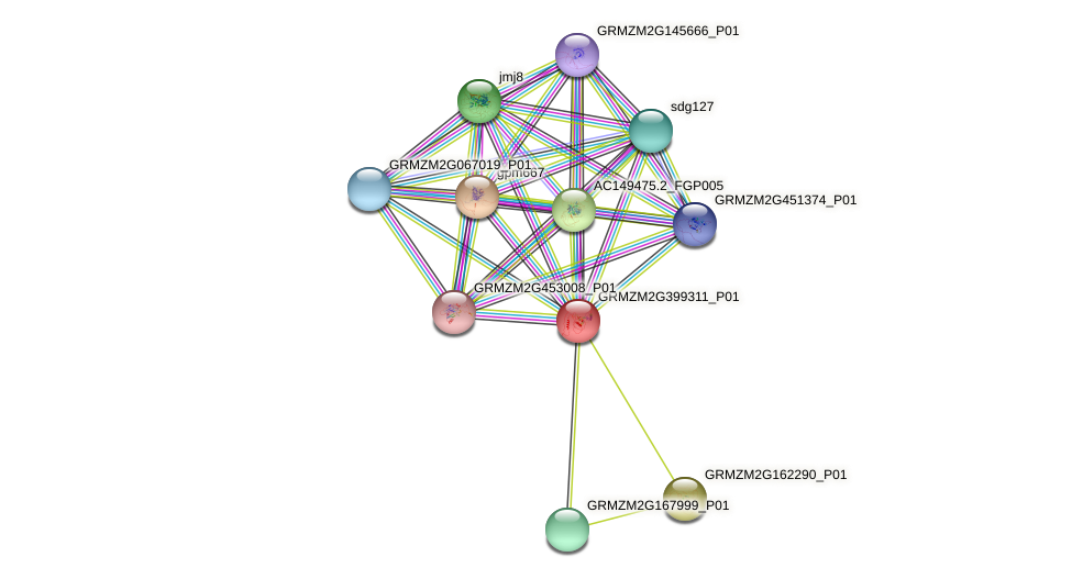 GRMZM2G399311_P01 protein (Zea mays) - STRING interaction network