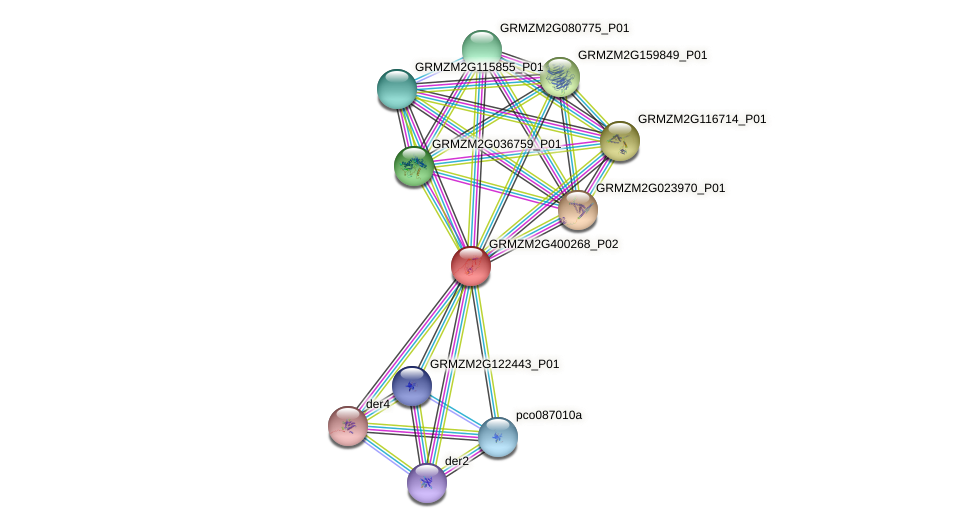 Zm.115538 protein (Zea mays) - STRING interaction network