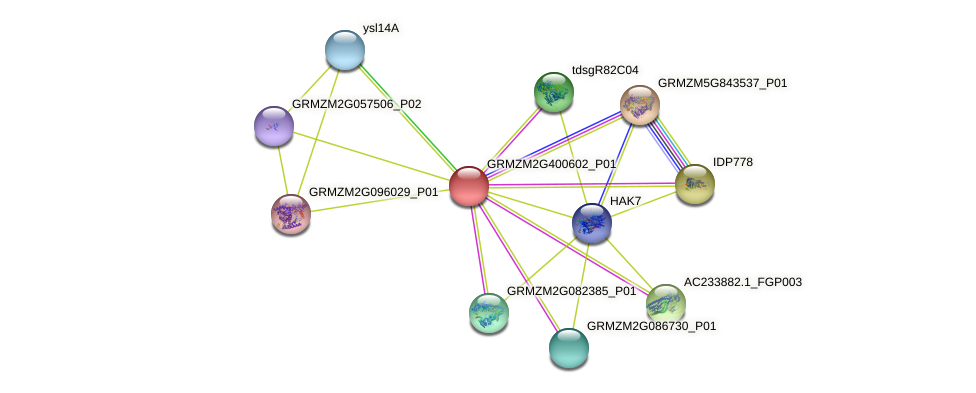 GRMZM2G400602_P01 protein (Zea mays) - STRING interaction network