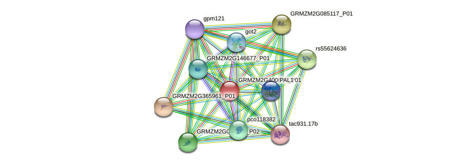GRMZM2G400604_P01 protein (Zea mays) - STRING interaction network