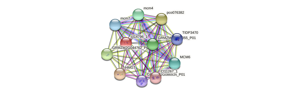 cl14796_1 protein (Zea mays) - STRING interaction network