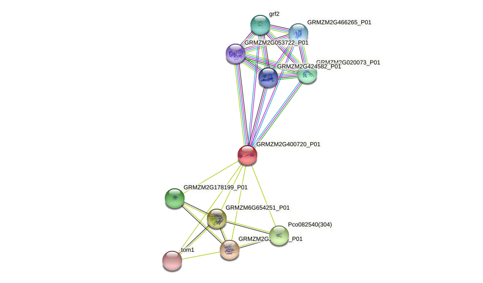 GRMZM2G400720_P01 protein (Zea mays) - STRING interaction network