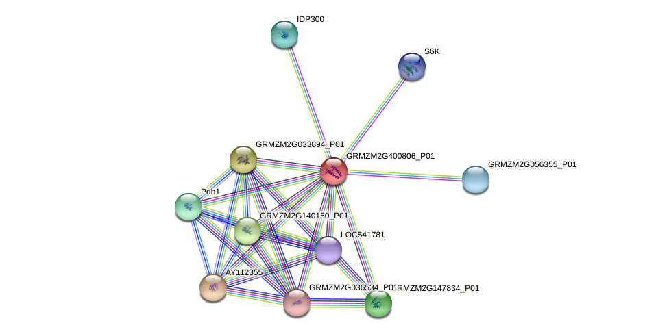 GRMZM2G400806_P01 protein (Zea mays) - STRING interaction network