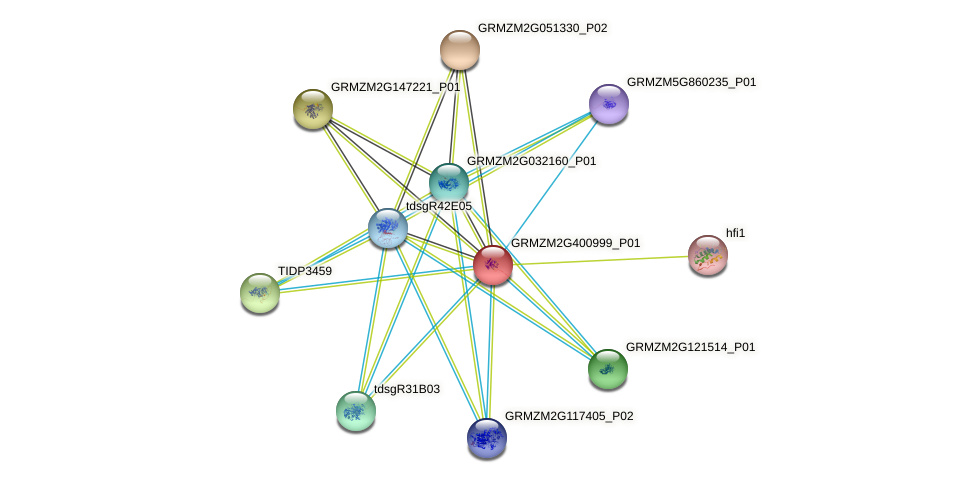 103640665 protein (Zea mays) - STRING interaction network