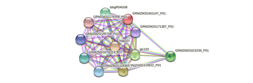 GRMZM2G401147_P01 protein (Zea mays) - STRING interaction network