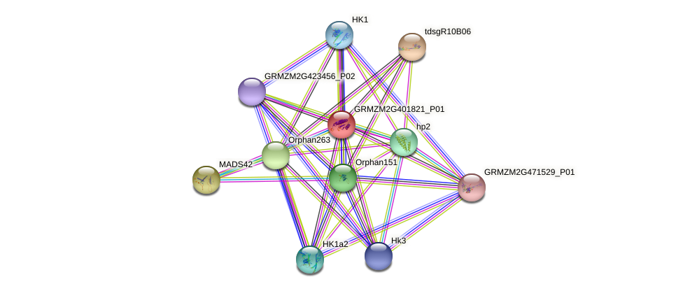 GRMZM2G401821_P01 protein (Zea mays) - STRING interaction network