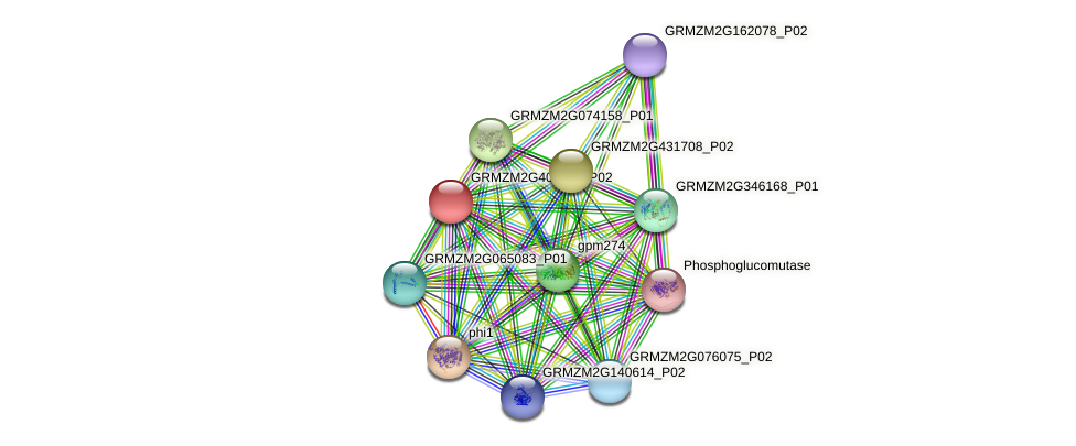 GRMZM2G402211_P02 protein (Zea mays) - STRING interaction network