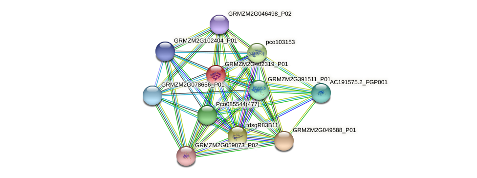 GRMZM2G402319_P01 protein (Zea mays) - STRING interaction network