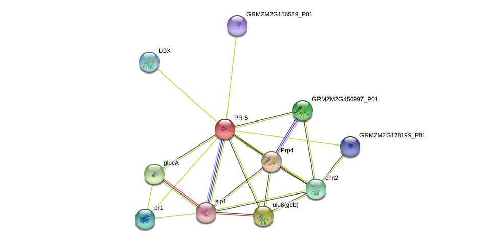 Zm.6659 protein (Zea mays) - STRING interaction network