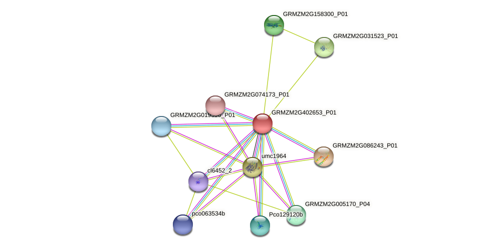 GRMZM2G402653_P01 protein (Zea mays) - STRING interaction network