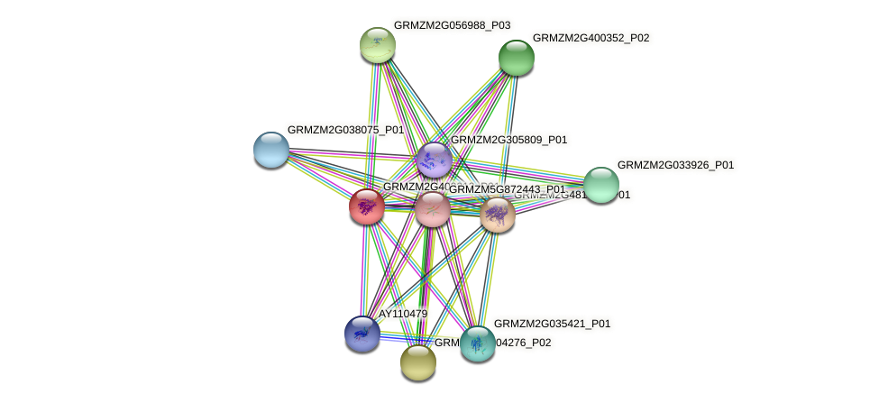 GRMZM2G403313_P01 protein (Zea mays) - STRING interaction network