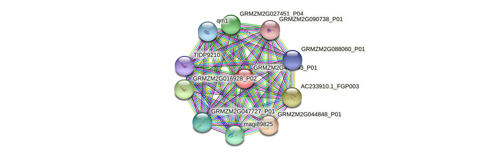 GRMZM2G403493_P01 protein (Zea mays) - STRING interaction network