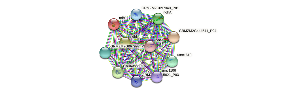 ndhJ protein (Zea mays) - STRING interaction network