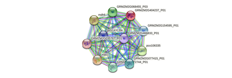 GRMZM2G404237_P01 protein (Zea mays) - STRING interaction network